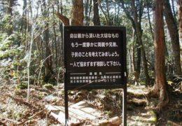 Аокигахара, Япония — «лес самоубийц и призраков»